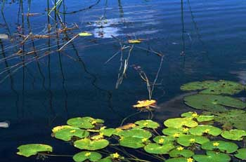 Чистый пруд в отрадновском поселении